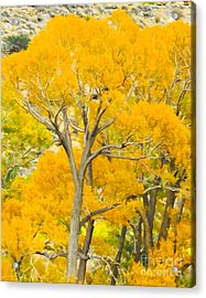 Colorful Canopy Acrylic Print