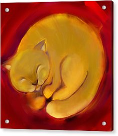 Colorful Cat 1 Acrylic Print by Anna Gora