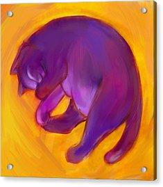 Colorful Cat 5 Acrylic Print by Anna Gora