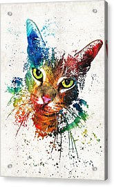 Colorful Cat Art By Sharon Cummings Acrylic Print by Sharon Cummings
