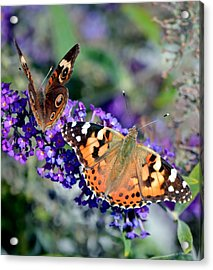 Colorful Cousins Acrylic Print by Deena Stoddard