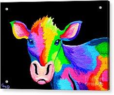 Colorful Cow-cow-a-bunga Acrylic Print by Nick Gustafson