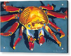 Colorful Crab Acrylic Print by Stephen Anderson