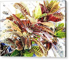 Colorful - Croton - Plant Acrylic Print by D Hackett