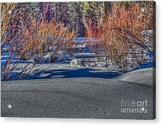 Colorful Despite Snow Acrylic Print