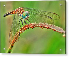 Colorful Dragonfly Acrylic Print