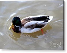 Colorful Duck Acrylic Print