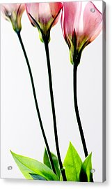 Colorful Flower Acrylic Print by Sarit Saliman