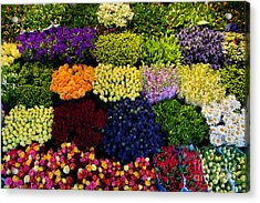 Colorful Flowers Background Acrylic Print by Michal Bednarek