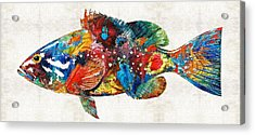 Colorful Grouper Art Fish By Sharon Cummings Acrylic Print by Sharon Cummings