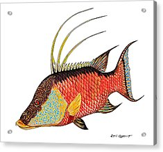 Acrylic Print featuring the painting Colorful Hogfish by Steve Ozment