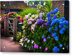 Colorful Hydrangea At The Gate. Giethoorn. Netherlands Acrylic Print by Jenny Rainbow