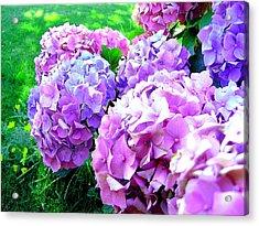Colorful Hydrangeas Acrylic Print by Mavis Reid Nugent