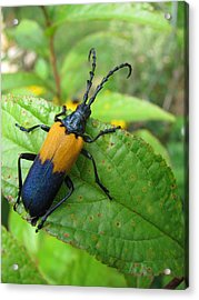 Colorful Insect Acrylic Print by Selma Glunn