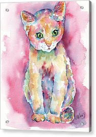 Colorful Kitten Acrylic Print