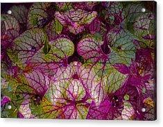 Colorful Leaf Acrylic Print by Eiwy Ahlund