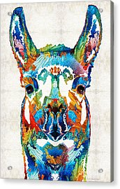 Colorful Llama Art - The Prince - By Sharon Cummings Acrylic Print by Sharon Cummings