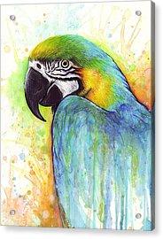 Macaw Painting Acrylic Print by Olga Shvartsur
