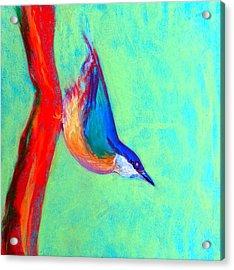 Colorful Nuthatch Bird Acrylic Print