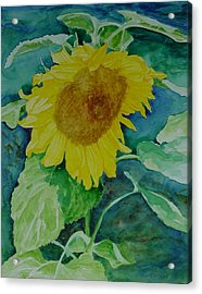 Colorful Original Watercolor Sunflower Acrylic Print