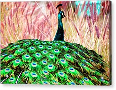 Acrylic Print featuring the photograph Colorful Peacock by Matt Harang