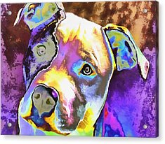 Colorful Pit Bull  Acrylic Print by Dan Sproul