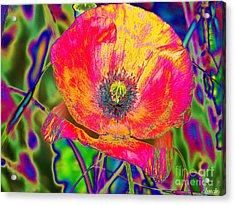 Colorful Poppy Acrylic Print by Carol Lynch