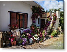 Colorful Potted Flower Garden At A Rural Home In Crete Acrylic Print by David Smith