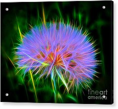 Colorful Puffball Acrylic Print