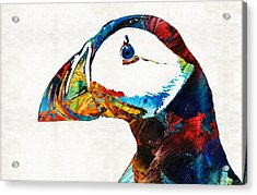 Colorful Puffin Art By Sharon Cummings Acrylic Print by Sharon Cummings