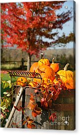 Colorful Pumpkins And Gourds Acrylic Print by Sandra Cunningham