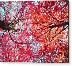 Acrylic Print featuring the photograph Abstract Red Blue Nature Photography by Artecco Fine Art Photography