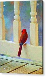Colorful Redbird Acrylic Print by Kenny Francis