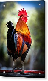 Colorful Rooster Acrylic Print by Celso Diniz