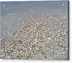 Colorful Shells At The Water's Edge Acrylic Print by Jeanne Forsythe