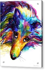 Colorful Sheltie Dog Portrait Acrylic Print