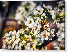 Colorful Spring Acrylic Print by Sennie Pierson