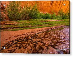 Colorful Streambed - Coyote Gulch - Utah Acrylic Print