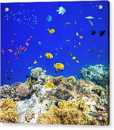 Colorful Tropical Fish On Red Sea Acrylic Print by Cinoby