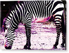 Colorful Zebra 2 - Buy Black And White Stripes Art Acrylic Print by Sharon Cummings