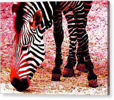 Colorful Zebra - Buy Black And White Stripes Art Acrylic Print by Sharon Cummings