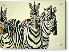 Colorful Zebras Painting Acrylic Print by Maja Sokolowska
