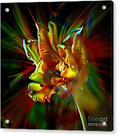 Colorfull Tulip Acrylic Print