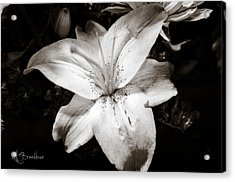 Colorless Acrylic Print by Lori Breedlove