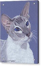 Colorpoint Vignette Acrylic Print