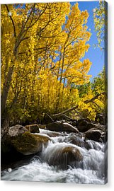 Colors And The Cascades Of South Fork Bishop Creek Acrylic Print