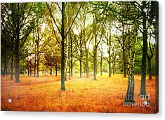 Acrylic Print featuring the photograph Colors Cool by Boon Mee