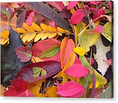 Acrylic Print featuring the photograph Colors Of Autumn by Shane Bechler