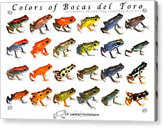 Colors Of Bocas Del Toro Acrylic Print by JP Lawrence