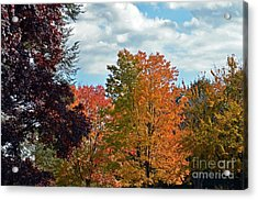 Colors Of Fall Acrylic Print by Judy Wolinsky